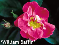 William Baffin