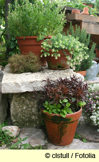 plant containers / pots