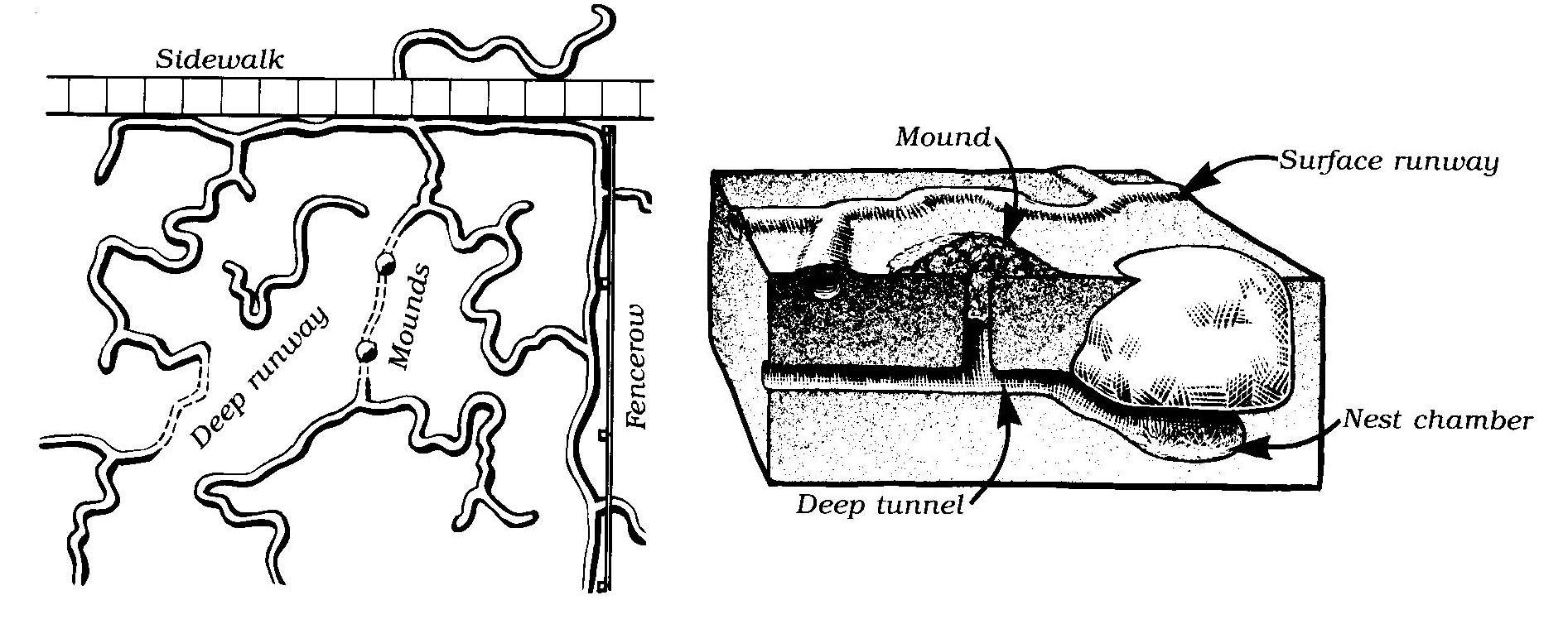 mole tunnel system